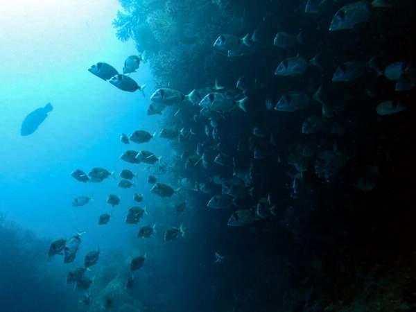 Banc de poisson lors d'une plongée à Marseille