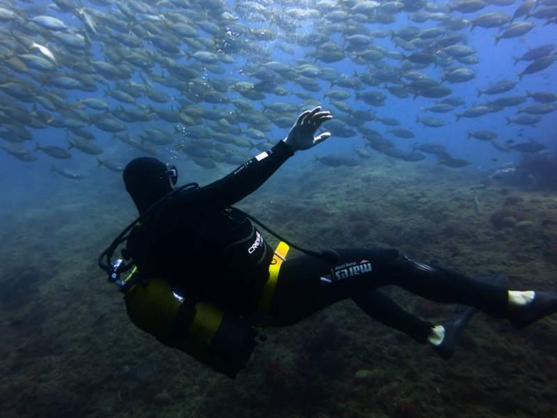Plongée à Marseille et dans le parc national des Calanques